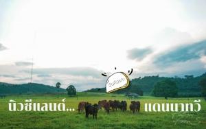 """ชวนเที่ยว ชมวิว แลวัว """"นิวซีแลนด์แดนนาทวี"""""""