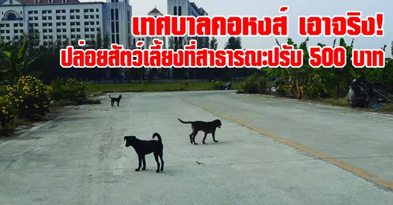 หาดใหญ่ | เทศบาลเมืองคองหส์ เอาจริง! ปล่อยสัตว์เลี้ยงบนถนนสาธารณะ ปรับ 500 บาท