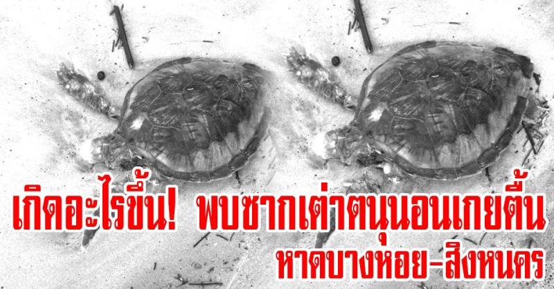 สิงหนคร   เกิดอะไรขึ้น! พบซากเต่าตนุนอนตายเกยตื้น บริเวณหาดบางหอย