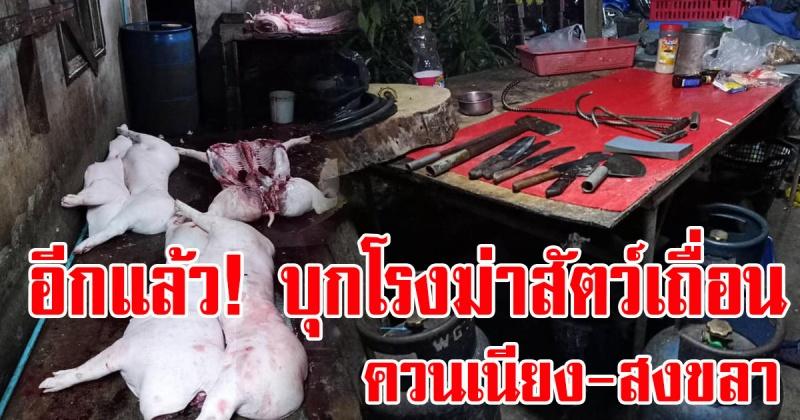 ควนเนียง   จับอีกแล้ว! โรงฆ่าสัตว์เถื่อน ยึดของกลางมูลค่า 155,160 บาท