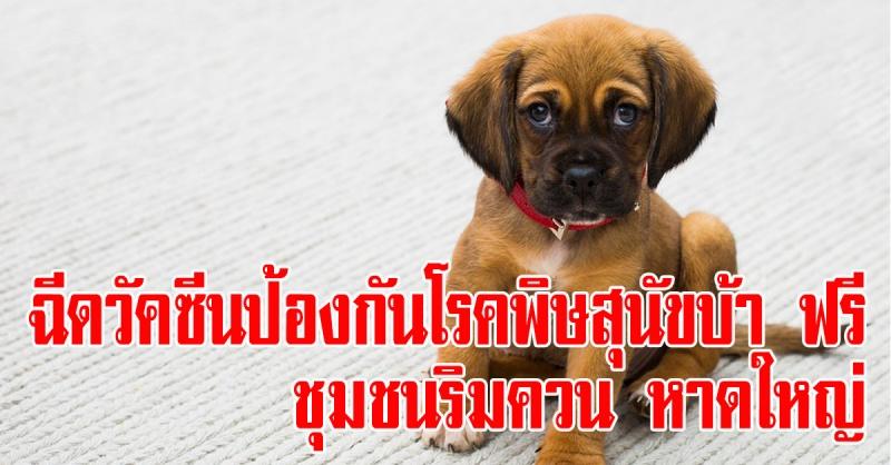 หาดใหญ่ | 23 เมษายนนี้ บริการฉีดวัคซีนป้องกันโรคพิษสุนัขบ้า ฟรี!