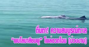 สิงหนคร | (มีคลิป) ตื่นตา! โลมาสีชมพู โผล่อวดโฉมทักทาย กลางทะเลม่วงงาม