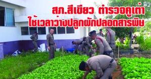 คูเต่า   สภ.สีเขียว ตำรวจสภ.คูเต่าร่วมใจปลูกผักปลอดสารพิษไว้ทานเอง  และแจกจ่ายประชาชน