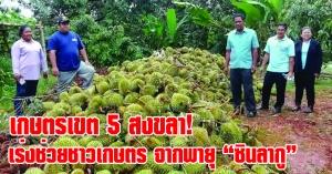 """สงขลา   เกษตรเขต 5 เร่งเตรียมการช่วยเหลือพี่น้องเกษตรกรที่ได้รับผลกระทบจากพายุ """"ซินลากู"""" โดยเร็วที่สุด"""