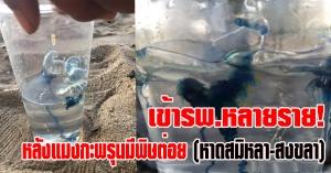 สงขลา | อันตรายเข้ารพ.หลายราย!  เด็กลงเล่นน้ำเจอแมงกะพรุนมีพิษต่อย ชายหาดสมิหลา