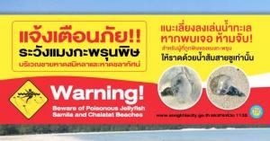 สงขลา | เตือนภัย! ระวังอันตรายจากแมงกะพรุนพิษบริเวณชายหาดชลาทัศน์และหาดสมิหลา