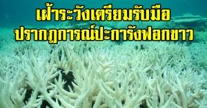 เฝ้าระวังเตรียมรับมือ การเกิดปรากฎการณ์ปะการังฟอกขาว