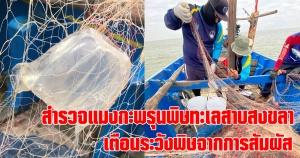 สงขลา | สำรวจแมงกะพรุนพิษทะเลสาบสงขลา  เตือนชาวประมงได้รับผลกระทบจากการสัมผัส