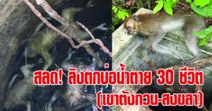 สงขลา | (มีคลิป) คุณลุงช่วยชีวิตลิงตกบ่อน้ำบนเขาตังกวนกว่า 30 ชีวิต อาจารย์สาววอนหน่วยงานช่วยเหลือด่วน!