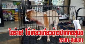 สะเดา | โหดร้าย! คนใจบาปใช้เคียวเกี่ยวข้าวปาดคอสุนัข ลึกเกือบถึงหลอดลม
