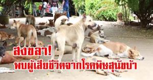 สงขลา กรมปศุสัตว์เผยพบผู้เสียชีวิตจากโรคพิษสุนัขบ้า หมาแมวป่วยเพิ่มขึ้นจากปีก่อน 1.5 เท่า