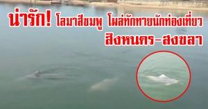 สิงหนคร | (มีคลิป) น่ารัก! โลมาสีชมพูโผล่ทักทายนักท่องเที่ยวกลางทะเล