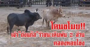 (มีคลิป) สงขลา | เร่งตามคนร้ายขโมยวัวชนตัวดัง ชนะเดิมพัน 2 ล้านบาท