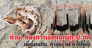 หาดใหญ่ | ขอรับบริจาคเลือดเพื่อผู้ป่วยถูกงูกะปะกัด