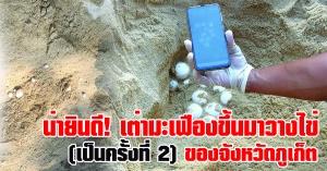 ภูเก็ต | สุดยินดี เต่ามะเฟืองขึ้นมาวางไข่ ครั้งที่2 ที่บริเวณหาดทรายแก้ว ในเขตอุทยานแห่งชาติสิรินาถ