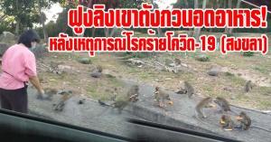 สงขลา | (มีคลิป) หิวหนัก! ฝูงลิงเขาตังกวนอดอาหาร หลังไม่มีนักท่องเที่ยว เนื่องจากเหตุการณ์เเพร่ระบาดของเชื้อโควิด-19