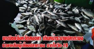 สงขลา   พาณิชย์จังหวัดสงขลา เดินหน้าเชื่อมโยงการจำหน่ายระบายปลากะพงจังหวัดสงขลา ปี 2564 เพื่อช่วยเหลือพี่น้องเกษตรกรผู้เลี้ยงปลากะพง หลังได้รับผลกระทบจากสถานการณ์โควิด-19