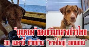 """สงขลา   """"บุญรอด"""" สุนัขลอยคอกลางอ่าวไทย เตรียมย้ายบ้าน 30 เมษานี้"""