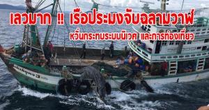 เลวมากๆ !! คืบหน้า...กรณีฉลามวาฬถูกจับที่ เกาะราชา จังหวัดภูเก็ต